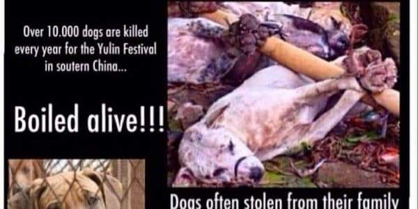 china is killing cats and dogs an all kinds of animals tor consumption